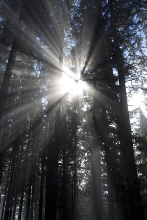 dark forest with sun and sun beam Stock Photo