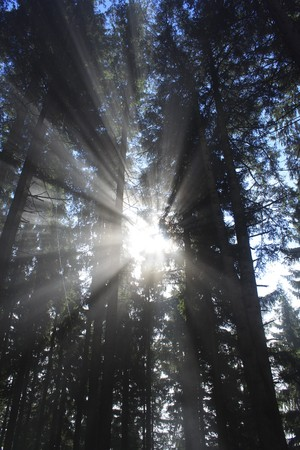 dark forest with sun and sun beam