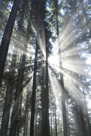 wooden beams: dark forest with sun and sun beam Stock Photo