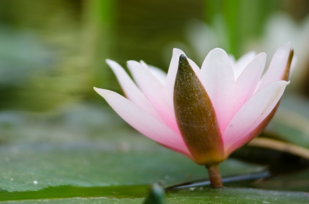 water lily Imagens - 17316867