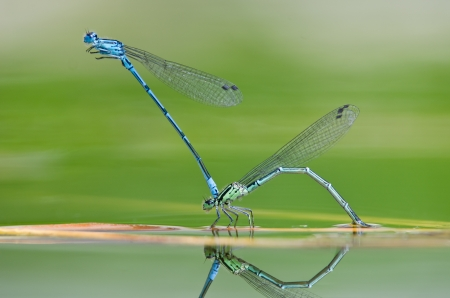 two dragonfly