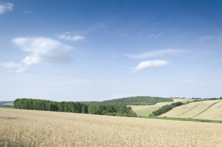 wheat land background Imagens