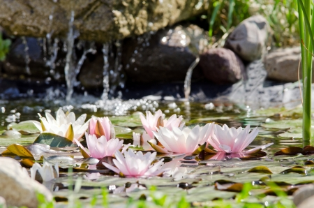 water lily background Imagens - 17288435
