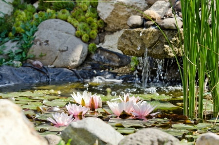 water lily background Stock Photo - 17288440