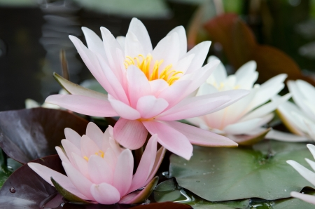 water lily bacground Imagens - 17288426