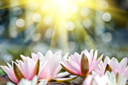 water lily background Imagens