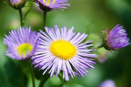 blue flower Imagens - 17288415