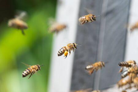 honey bee Imagens - 134132629