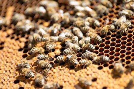 honey bee Imagens - 134132754