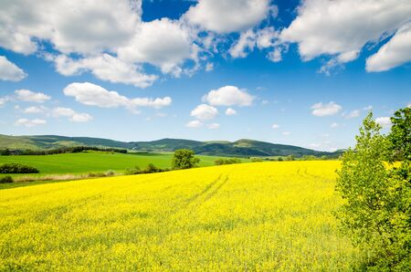 beautiful rape field Stockfoto