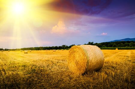 hay bales in the sunset Stock Photo
