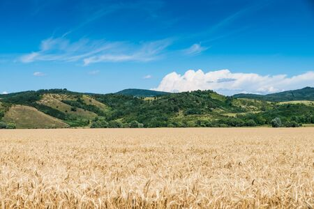 wheat land Imagens