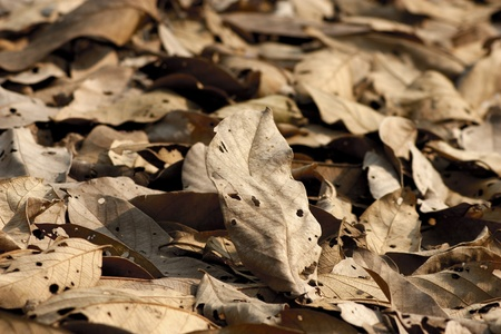 dried leaves on the ground photo