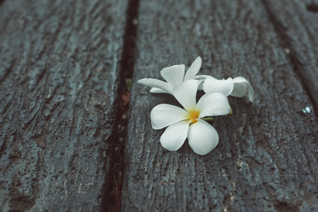 color effect: Frangipani flower on stone table with color effect