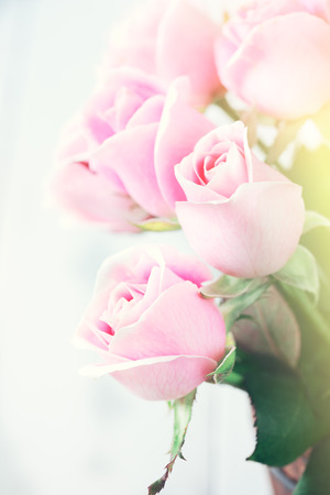 color effect: pink roses with soft light and color effect