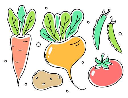 Vector set of illustration of vegetable. Turnip, tomato, potato, carrot, peas pod on white color background