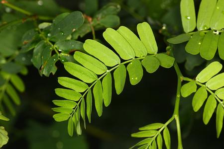 a green leaf plant on dark background.