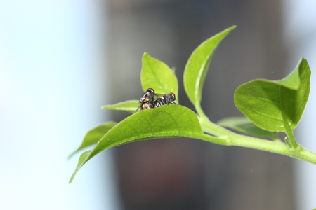 fly just mating on plant