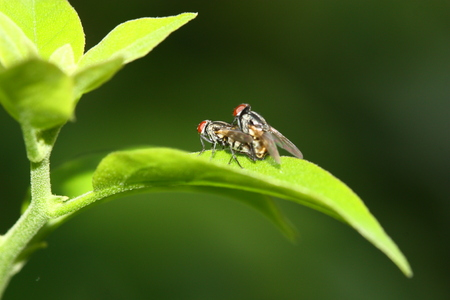 back view of fly mating blur background in morning