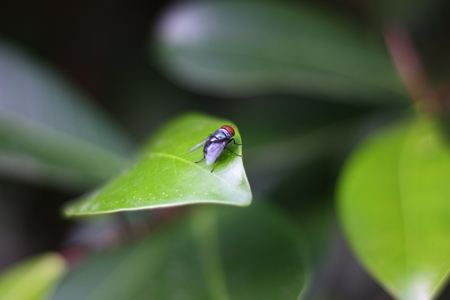 fly on leaf of green plant blur background