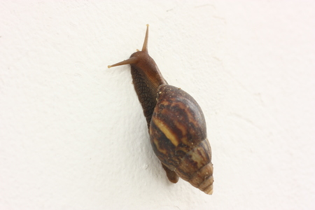 big snail on the white wall
