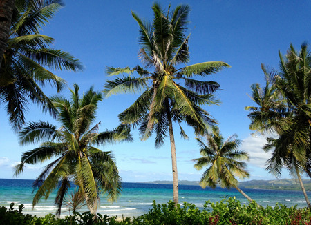 daydream: Palm trees at at beach in Siquijor Stock Photo