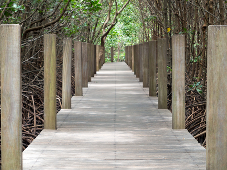 mangrove: Path to the mangrove forest Stock Photo
