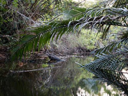shady: calm swamp in shady day