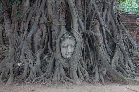 cabeza de buda: Cabeza de Buda en el �rbol de higuera en el Wat Mahathat