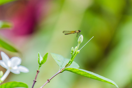 yellow little dragonfly on flower Stock Photo
