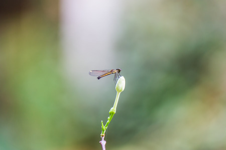 damsels: yellow little dragonfly on flower Stock Photo