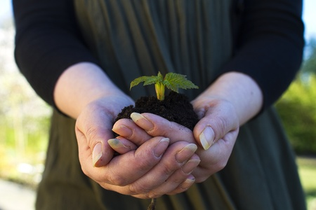 seedling in hands Stock Photo - 13550586
