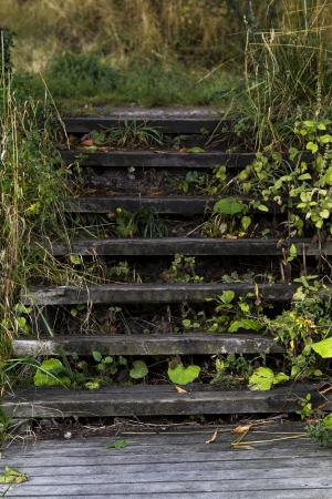wood stairs in forrest in denmark photo