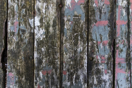 distressed wood: Blue weathered wooden texture