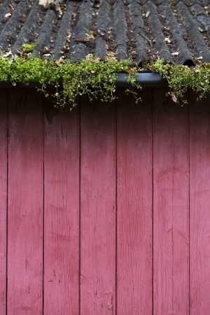 red wood wall with overgrown gutter Stock Photo - 22973927