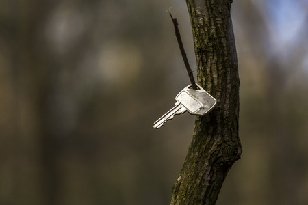 A key hanging on a small branch in a forest photo