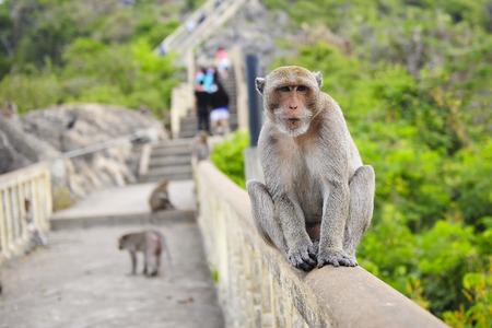 khan: Monkey at Prachuap Khiri Khan Thailand