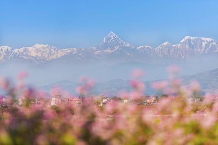 fishtail: Himalayan mountain peak during sunrise  Machapuchare or Fishtail peak in Nepal