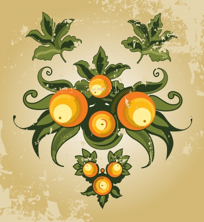 vintage oranges Illustration