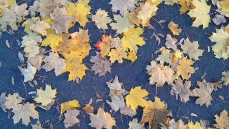 Autumn leaves fallen on the sidewalk in the park