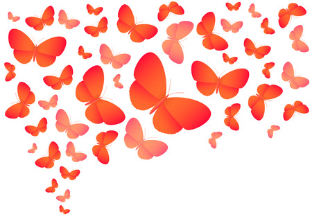 Colorful vector butterflies on white Vector