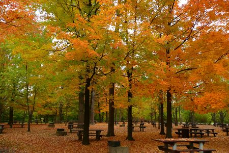 pit fall: Falling leaves have covered this picnic area including most of the picnic tables. Stock Photo