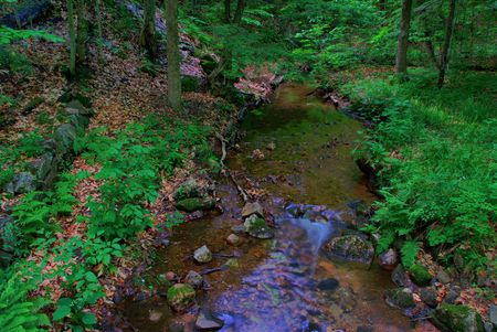 A small stream winds through the forest in the late day light.  The water becomes more turbulent as it passes over some rocks in the foreground. Stock Photo - 3243153