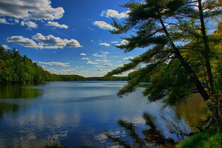 An evergreen leans over a lake under a cloudy sky. photo