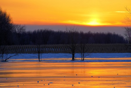 Pieces of ice are highlighted on the on the surface of a frozen stream just after sunset.  The rows of a cornfield are highlighted by the snow. photo
