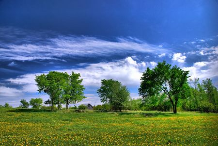 cirrus: A field of dandelions on a warm sunny day.  Clouds and barn in the distance.