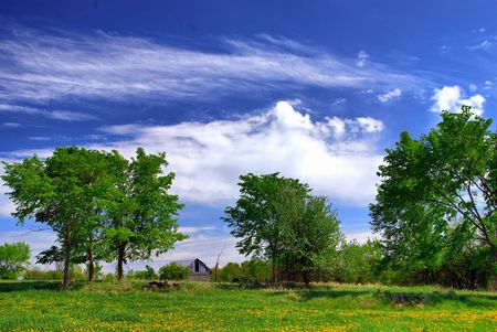cirrus: Trees and a field of dandelions.  An old barn in the distance on a warm sunny day.