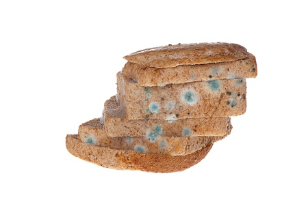 moldy: Moldy bread on white background.
