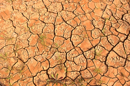 scorched: Scorched earth during drought. Stock Photo