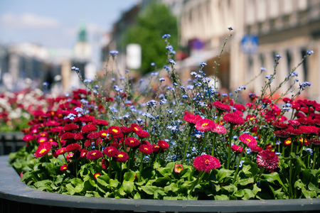 Flowers in a pot near the road to the Old Town in Warsaw. Standard-Bild - 101680445
